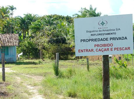 Biopalma da amazônia
